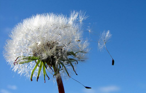 Creating Change, Dandelion Breaks Free