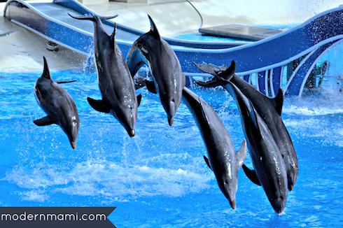 Pilot Whales at SeaWorld Orlando