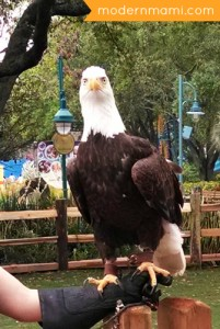 SeaWorld American Bald Eagle