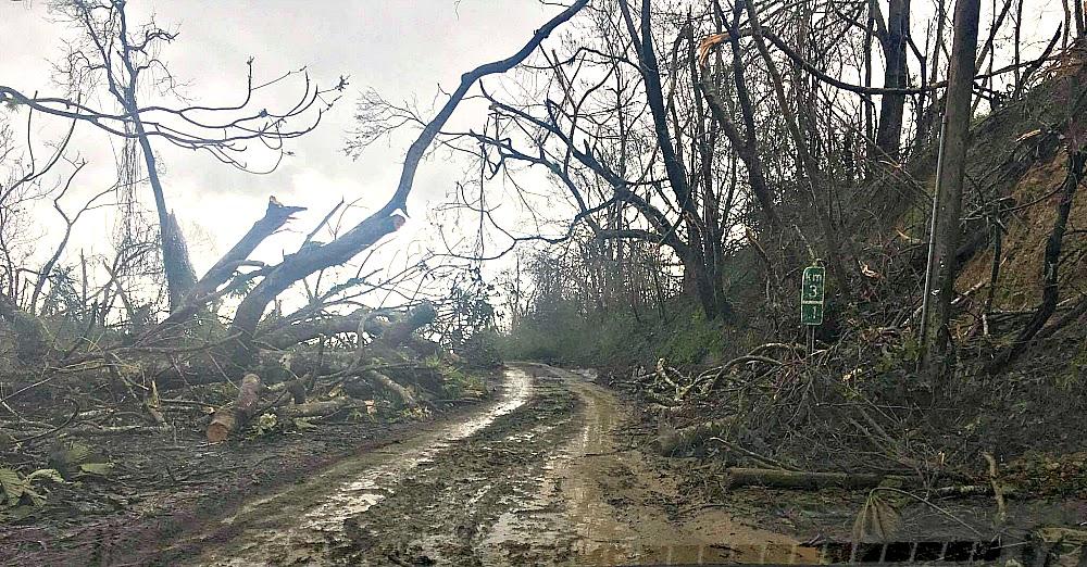 Understanding the Crisis in Puerto Rico After Hurricane Maria #UnitedforPR